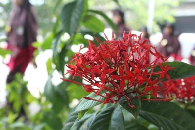Bunga (Lagi)